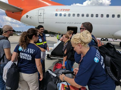International Fund for Animal Welfare has deployed a team of disaster responders to the islands of St. John and St. Thomas. The teams will deliver emergency relief supplies and conduct further assessments on the islands. (c)IFAW