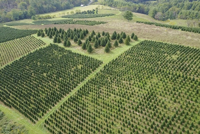 The Garden Gates hand selects each Christmas Trees for clients in New Orleans and Metairie.