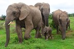 Prince William's Wildlife Conservation Charity Hosts Baby Shower For Orphaned Elephants