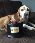 Pennsylvania dog's inconceivable impalement earns him the most unusual pet insurance claim of the year
