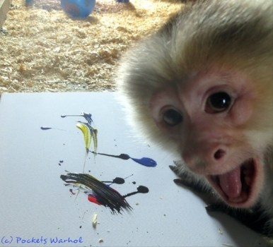 The Silent Auction will include original paintings by Pockets Warhol, a Capuchin Monkey from Story Book Farm Primate Sanctuary, whose artwork has garnered attention from worldwide news outlets and celebrities including Ricky Gervais and Dr. Jane Goodall. (CNW Group/Love Wild Live Free)