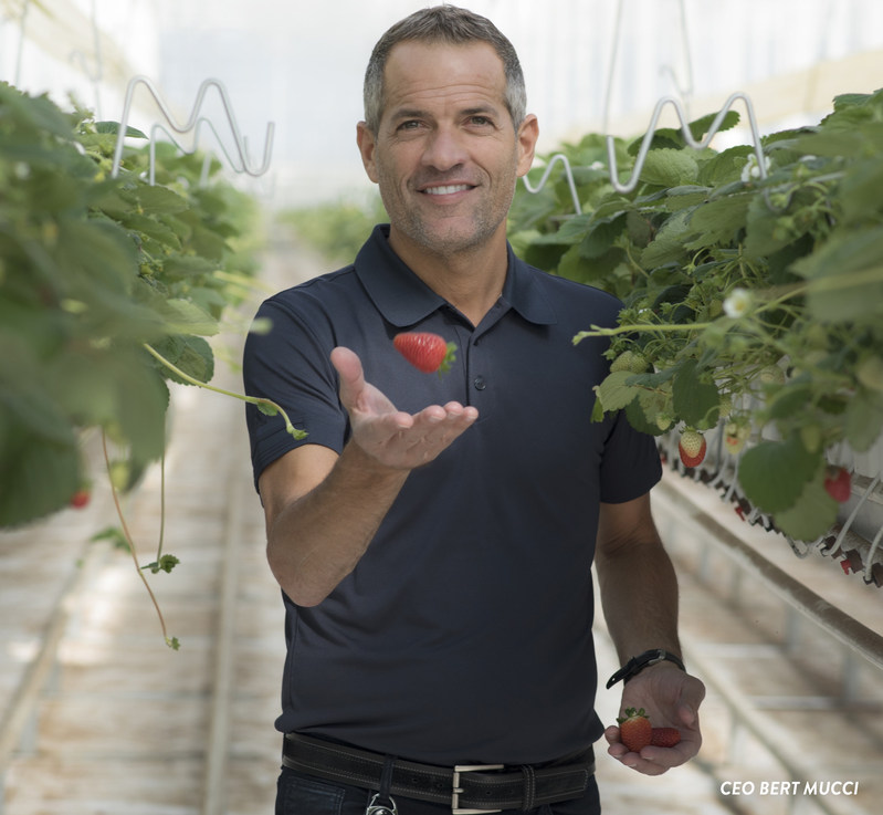 CEO, Bert Mucci (CNW Group/Mucci Farms)