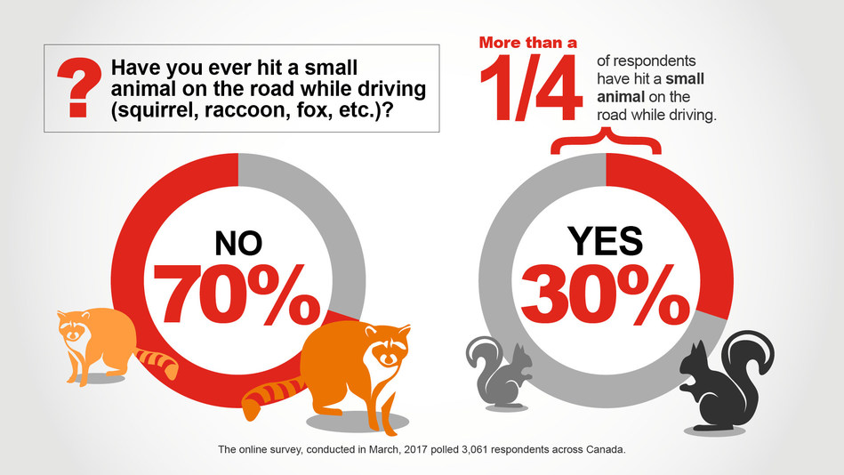 Have you ever hit a small animal on the road while driving? (CNW Group/State Farm)