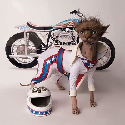 "@brookesphynx depicted here as Evel Knievel was the 2nd runner up of Petco's ""Make a Scene"" photo contest."