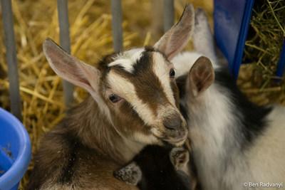 Photo credit: Ben Radvanyi (CNW Group/Royal Agricultural Winter Fair)
