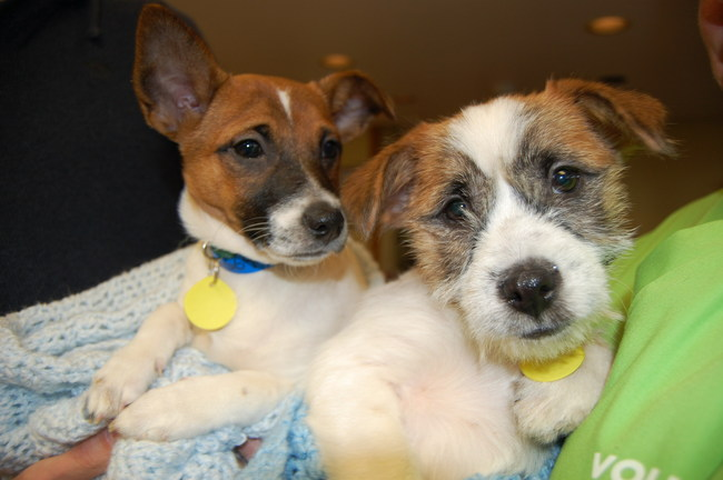 Puppies available for adoption at the Wisconsin Humane Society Racine shelter.  photo courtesy SC Johnson