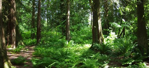 The Blaauw Eco Forest Photo Credit: Trinity Western University (CNW Group/Trinity Western University)