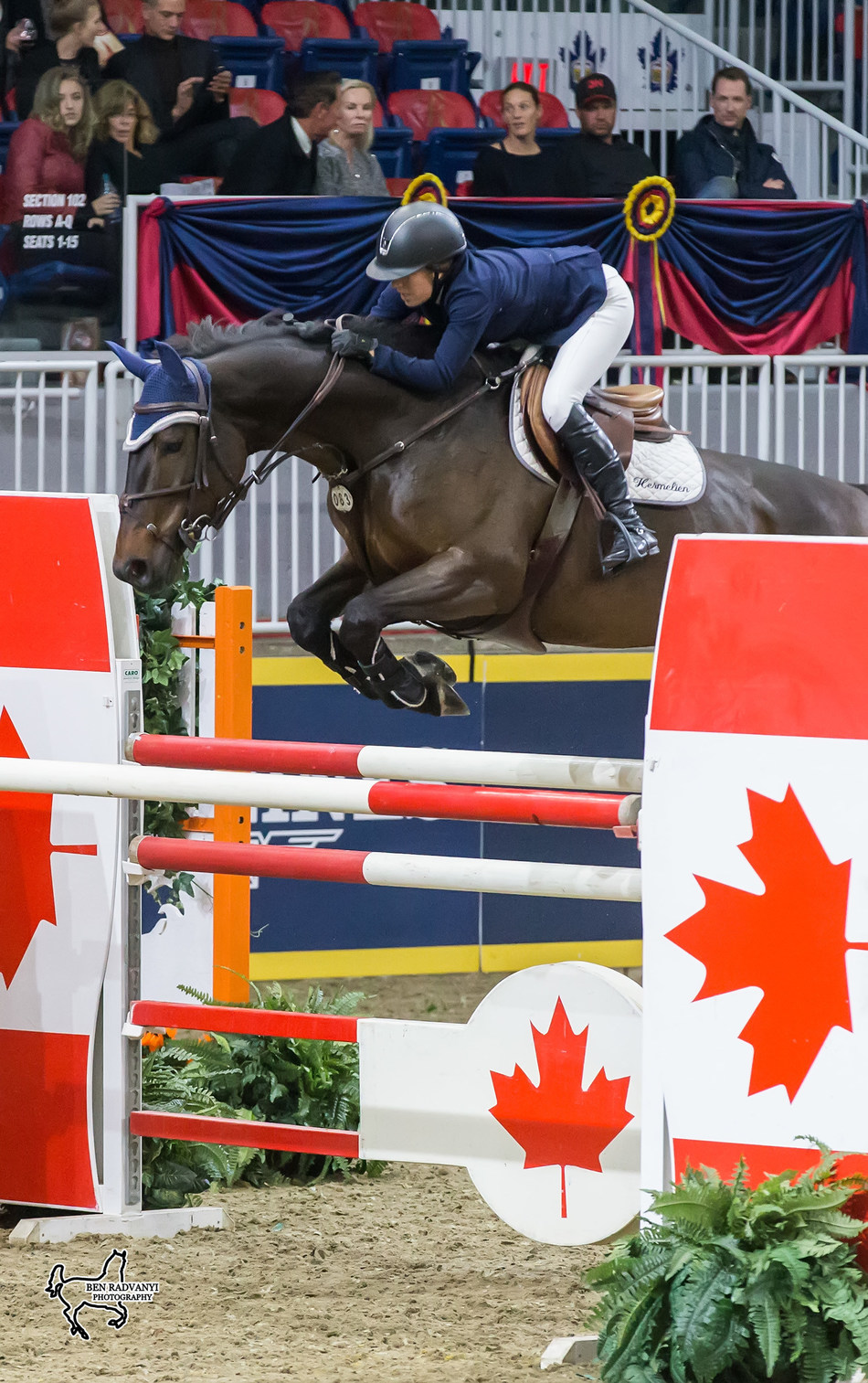 Ali Ramsay of Victoria, BC, placed second in the opening round of the $125,000 Canadian Show Jumping Championship riding Hermelien VD Hooghoeve on Friday, November 3, at the Royal Horse Show. Photo by Ben Radvanyi Photography (CNW Group/Royal Agricultural Winter Fair)