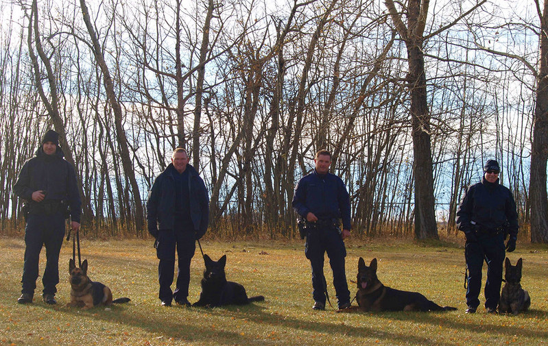 The first four RCMP dog teams to be trained to detect human remains. From left to right: Corporal Andrew Tarala with Genie from Brandon, MB; Constable Brian Veniot with Doc from Halifax, NS; Corporal Jesse Gawne with Ejay from Lethbridge, AB; Staff Sergeant Joel Leblanc with Henny from Surrey, BC. (CNW Group/Royal Canadian Mounted Police)