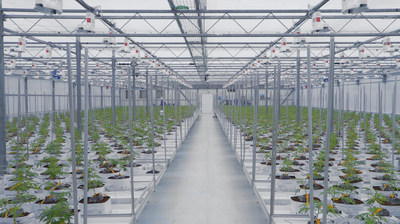 One of three new 10,000 sq. ft. flowering rooms at the 7ACRES Hybrid Facility (CNW Group/Supreme Pharmaceuticals Inc.)