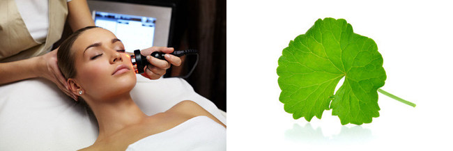 Centella asiatica: the ultimate anti-aging herb