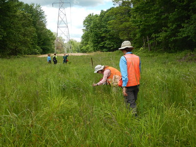 Native plant restoration work and ongoing environmental maintenance in the ITC Michigan electricity transmission corridor crossing the Chippewa Nature Center in Midland County have earned the utility the Grasslands Project Award from the Wildlife Habitat Council.