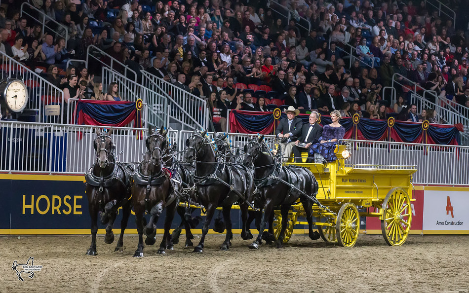 Blue Ribbon Days Percherons, driven by Dean Woodbury and owned by the Albert Cleve and Jim Day families, won the $25,000 Royal Six-Horse Draft Championship on closing night of the 2017 Royal Horse Show in Toronto, ON. Photo by Ben Radvanyi Photography (CNW Group/Royal Agricultural Winter Fair)