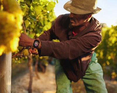Trabajadores agrícolas usan tecnología para la seguridad; se ha creado la app Calor