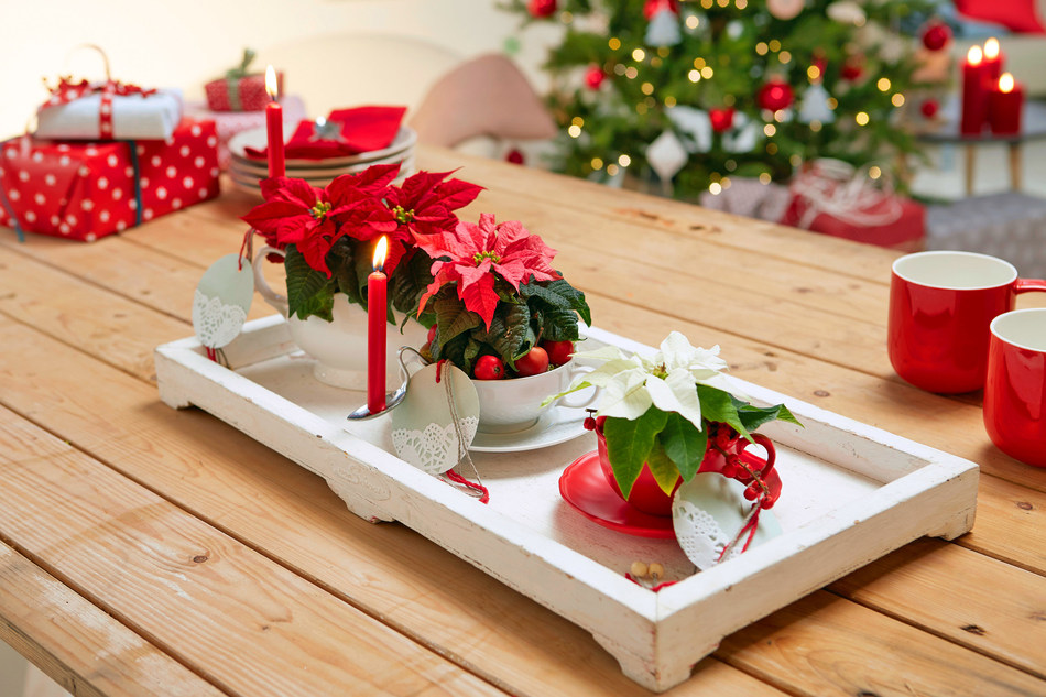 Scandi-inspired upcycling with poinsettias (PRNewsfoto/Stars for Europe)