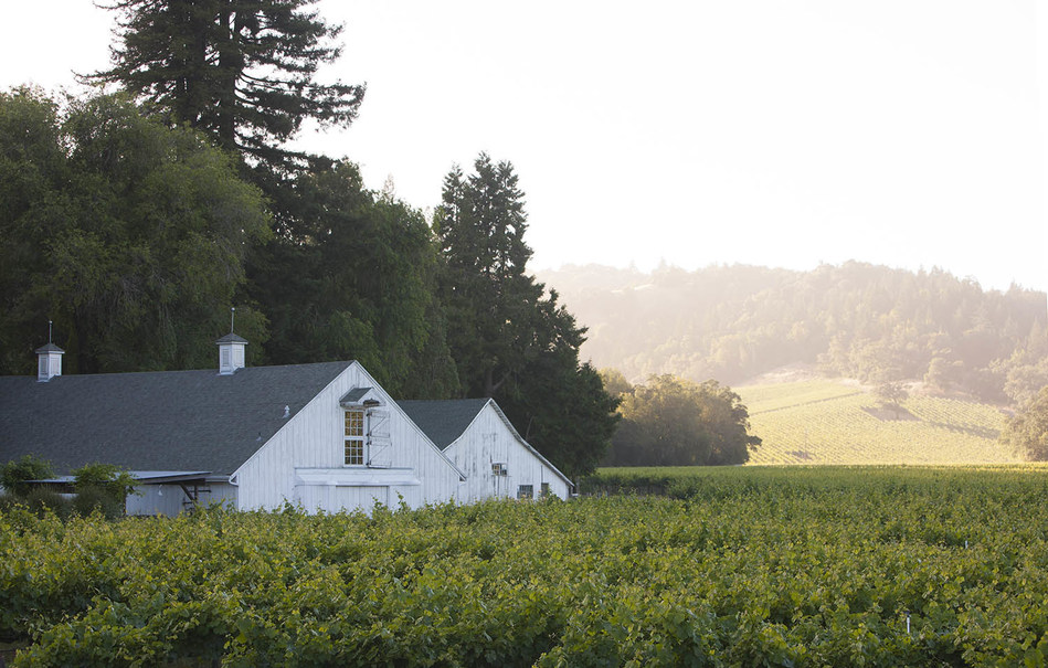 The 2018 Sonoma County Barrel Auction will take place at MacMurray Estate Vineyards™, one of Russian River Valley's most acclaimed Pinot Noir vineyards. Deeply rooted in Sonoma County, the picturesque MacMurray Estate has been in agricultural production for over 150 years. Pinot Noir vines were first planted in 1996, marking a new beginning for the historic estate as a world-class vineyard.