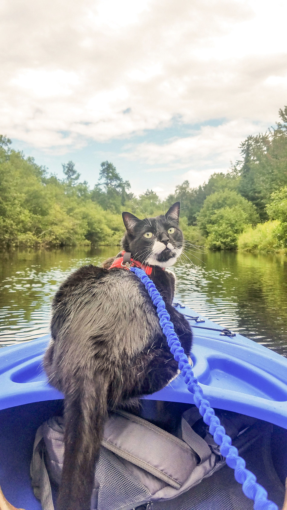 "Kim Randolph's story began with the adoption of Ruger, a ""pistol of a kitten,"" whose confidence and curiosity was exhilarating for Kim and her 70-lb. German Shepherd, Zoey. Kim began creating new ways to keep Ruger entertained, which included harness training. Ruger caught-on quickly and soon joined Kim on hikes and even kayaking trips!"