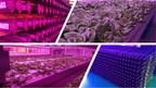 Future Farm Releases LED Canada Update