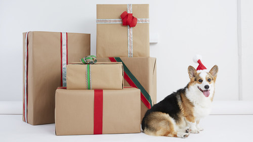 According to a new survey released today by BarkBox, the monthly box of toys and treats for dogs and their people, 80% of dog people will buy their pup a gift this holiday season.