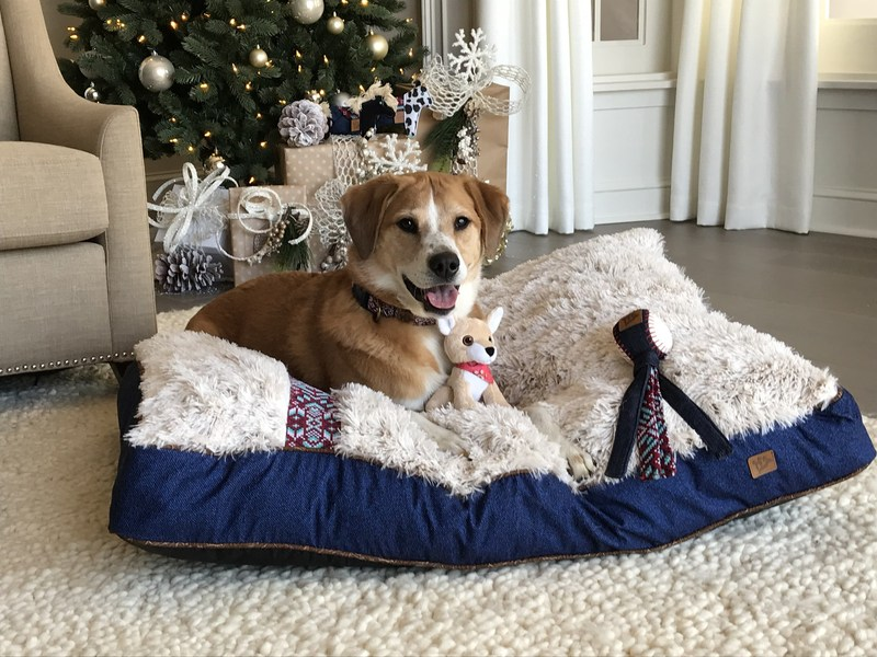 Petmate and MuttNation Fueled by Miranda Lambert team up to 'save a mutt' this holiday season.  All of Miranda's proceeds from the MuttNation pet collection including the Guitar Strap Collection go directly to MuttNation Foundation. Save a Mutt. Shop MuttNation.