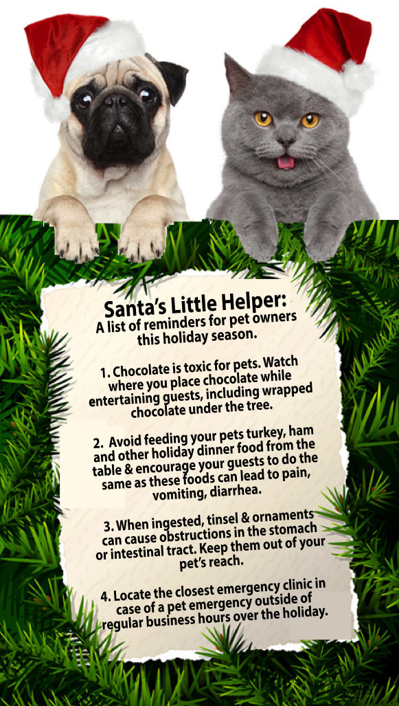 Holidays can be Ruff on Pets (CNW Group/Canadian Animal Health Institute)