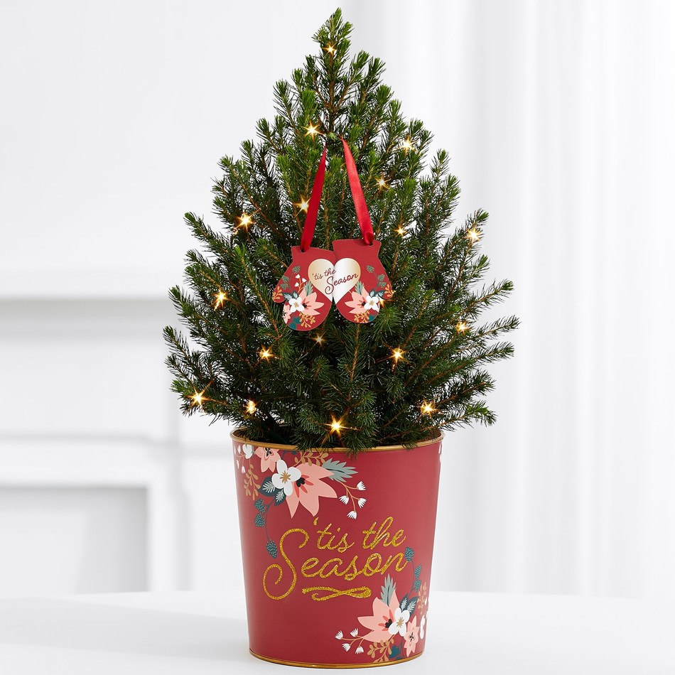 ProFlowers launched its Gifts for Good™ Collection, featuring this Giving Tree™, a live Spruce tree complete with twinkle lights, a festive tin and an ornament. This fresh, fragrant mini-tree arrives ready to decorate and can be planted outside after its holiday indoor enjoyment. ProFlowers will contribute $5 to KidsGardening from every item sold in the Gifts for Good™ Collection through Dec. 25, 2017.