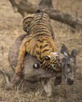 Kiss of Death (PRNewsfoto/Praveg Communications Limited)