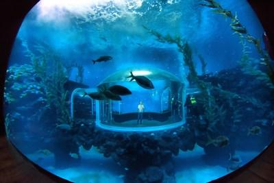 "Grand Opening of ""Poema del Mar"" Aquarium in Gran Canaria (PRNewsfoto/Loro Parque)"