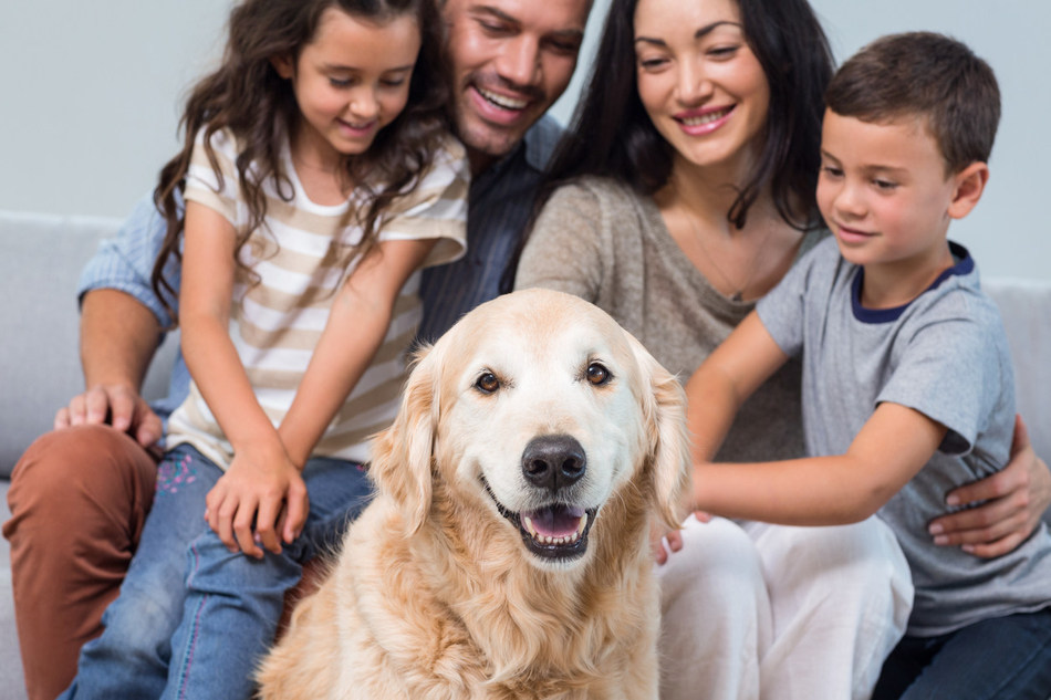 A major, new first-of-its-kind study by American Humane, supported by Zoetis and the Human-Animal Bond Research Institute (HABRI), shows that therapy dogs provide significant benefits to families with children undergoing treatment for cancer.