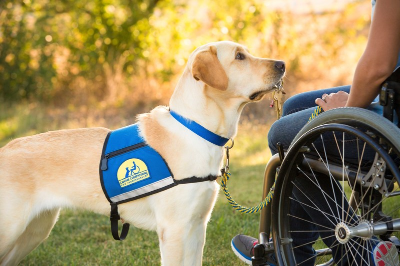 Canine Companions for Independence service dog retrieves keys