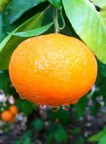 Orri Jaffa Mandarin Gets Sustainability Support (PRNewsfoto/Orri Jaffa)