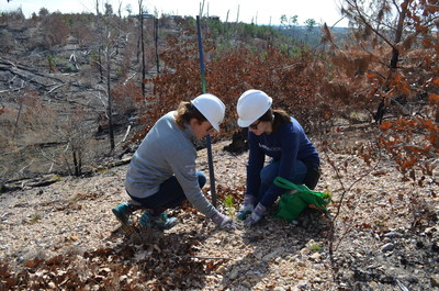 More than 50 Philadelphia Insurance employees planted 3,500 trees over two days in Bastrop State Park, Texas. The planting is part of the company's annual PHLY80K initiative to plant 80,000 trees. The company has funded the planting of 240,000 trees over the last three years.
