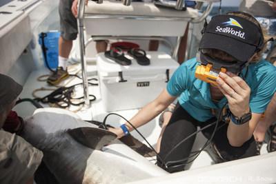 Los investigadores de SeaWorld comparten conocimientos y experiencias que contribuirán a la misión compartida de SeaWorld y OCEARCH de educar, inspirar y abogar por la salud del océano y los esfuerzos de conservación de animales marinos.