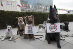 Dogs Take to the Streets in the World's First UN Animal Protest