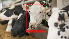Cainthus' imaging technology can identify individual cows by their features in several seconds to memorize a cow's unique identity, recording individual pattern and movements.
