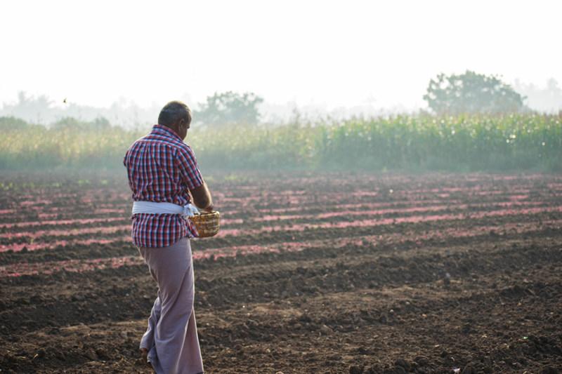 Arjuna Confirms Origin-Cultivated Amaranth Supply