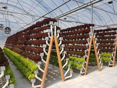(plants) One of the Pegasus Food Futures hydroponic farms, growing leafy greens in Abu Dhabi (PRNewsfoto/Pegasus Food Futures)