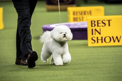 Pro Plan fed, Flynn wins 142nd Westminster Kennel Club Dog Show