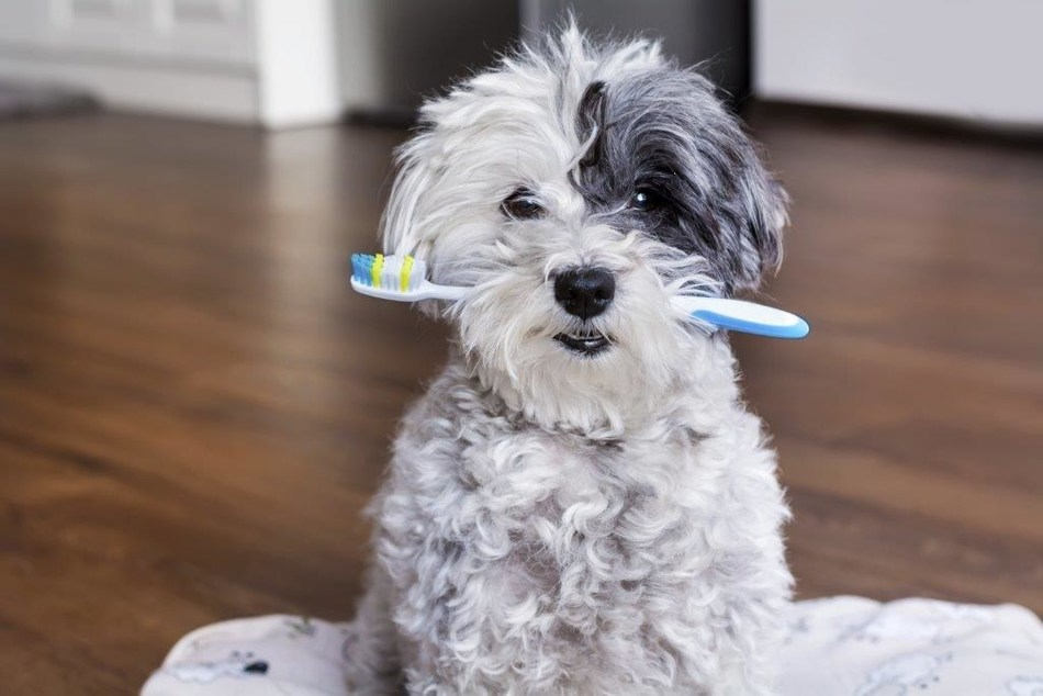 Brush Your Pet's Teeth