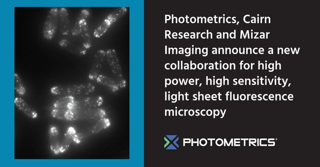 Photometrics, Cairn Research and Mizar Imaging Announce New Collaboration for High Power, High Sensitivity Light Sheet Fluorescence Microscopy