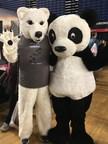 Race Against Extinction Polar Bear Accepts Panda Bear Dare
