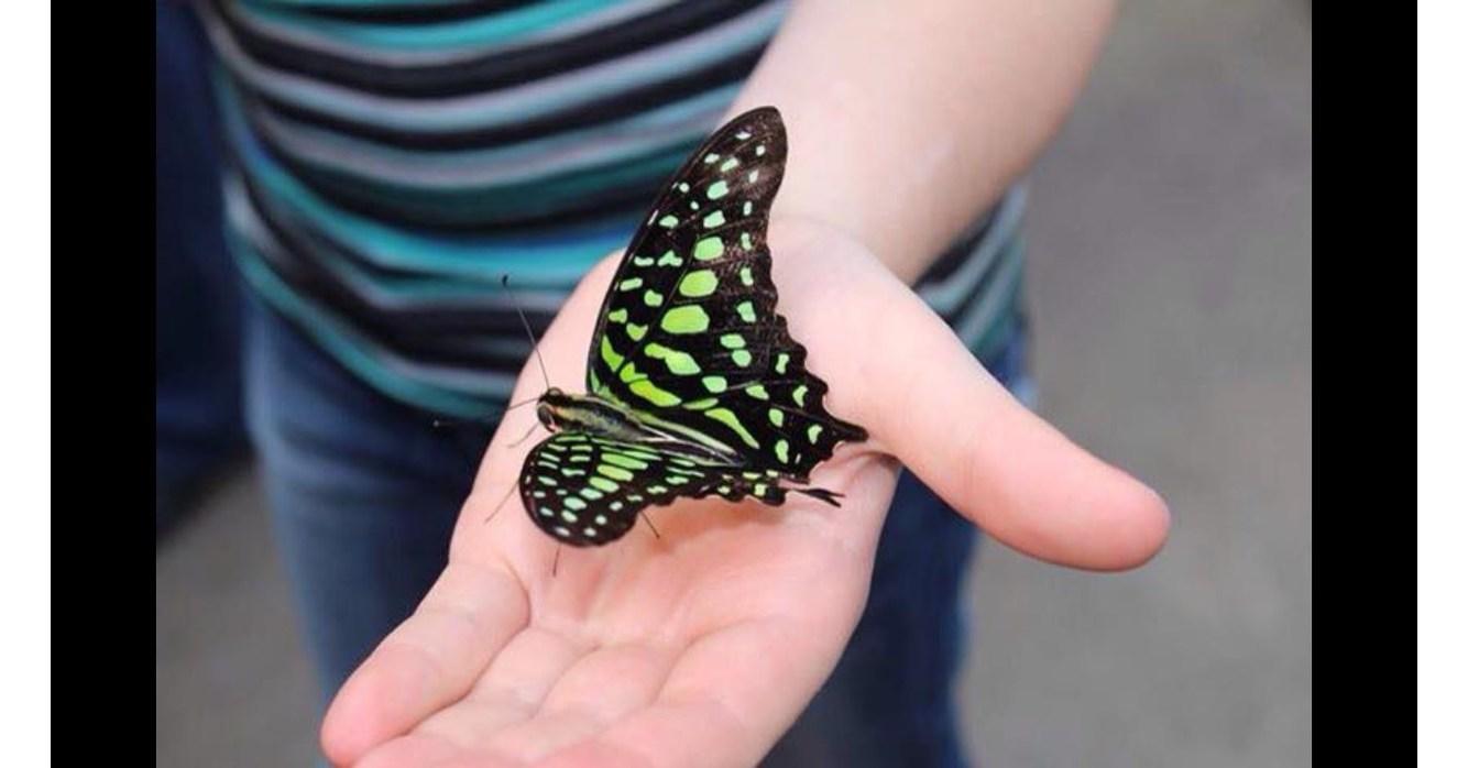 L 39 v nement papillons en f te enfin de retour chez jardin for Jardin hamel papillon 2016