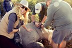 Mary Jean Tully assisting as an endangered rhino is moved to safety. (CNW Group/Tully Luxury Travel)