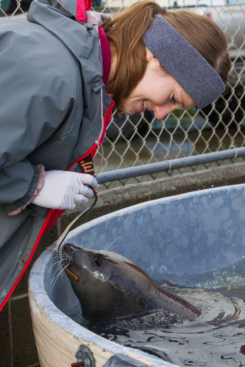Moody Gardens Biologist Allison Folsom and a rescued Harbor Seal named Ravioli get acquainted at Northcoast Marine Mammal Center in Calif. as they prepare to travel to a new, forever home in Galveston, TX