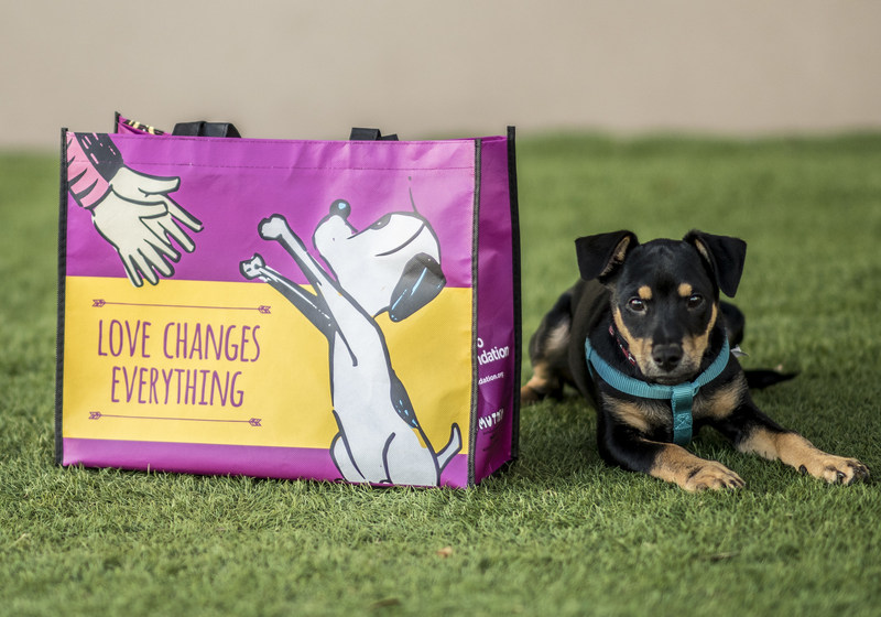"""Animal lovers can support the """"Love Changes Everything"""" campaign by making a donation in any Petco, Unleashed by Petco store or online at petcofoundation.org/love. Anyone who makes a donation of $10 or more will receive a limited-edition tote bag featuring MUTTS artwork specifically designed for the Love Changes Everything campaign while supplies last."""