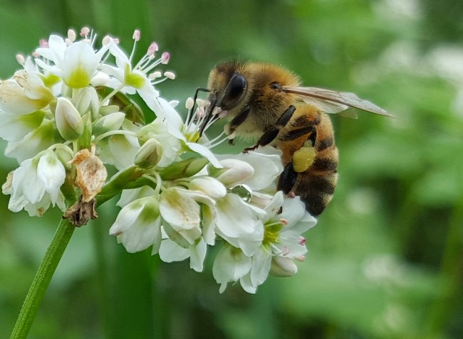Finding new solutions to the problem of varroa mites and other factors affecting honey bee health remains a focus of Bayer's Bee Care Program and that of many other researchers and organizations.