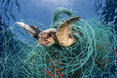 A loggerhead turtle trapped in an abandoned drifting net in the Mediterranean Sea. (c) Jordi Chias / naturepl.com