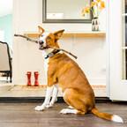 Mars Petcare ebnet den Weg in die Zukunft der Heimtierbranche mit neuem Start-up-Beschleuniger und 100 Mio. USD Venture-Finanzierung