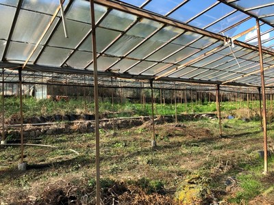 Evolution Bnk's Greenhouses that are being redeveloped in Sanremo (CNW Group/LGC Capital Ltd)