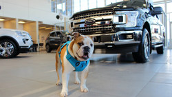 Edmonton area drivers can test drive vehicles to benefit local animals with Sherwood Ford's Adopt-A-Pet-Athon event.